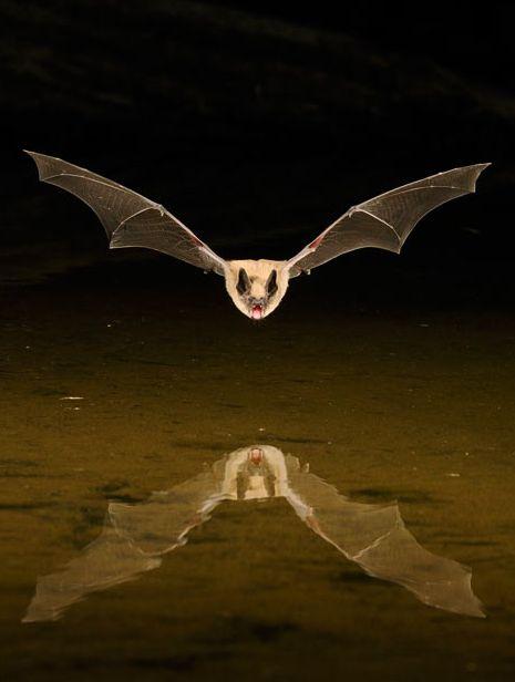 scott linstead captures wild creatures in motion 9
