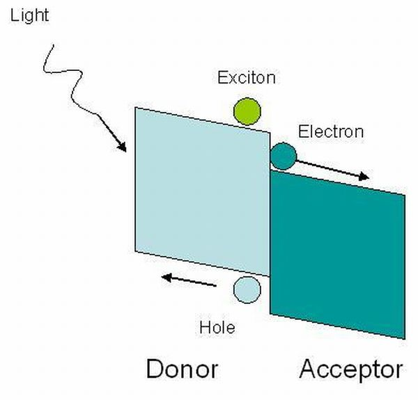 Short exciton diffusion length