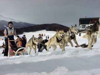 Warmer Temperatures Diverted Alaska's Famed Sled Dog Race