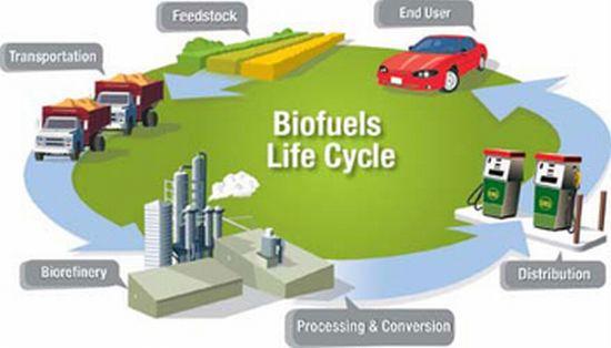 stable bio oils