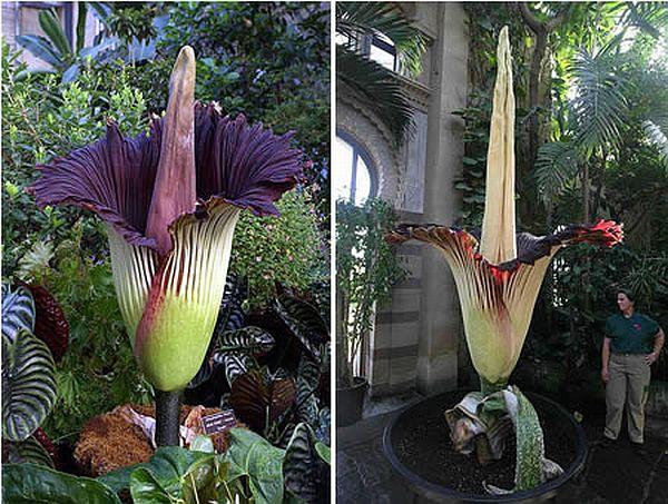Strangest plant species