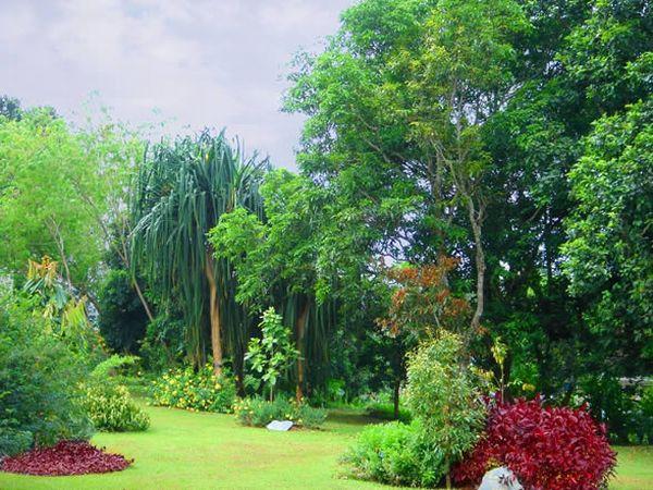 Xishuangbannan tropical rainforest: