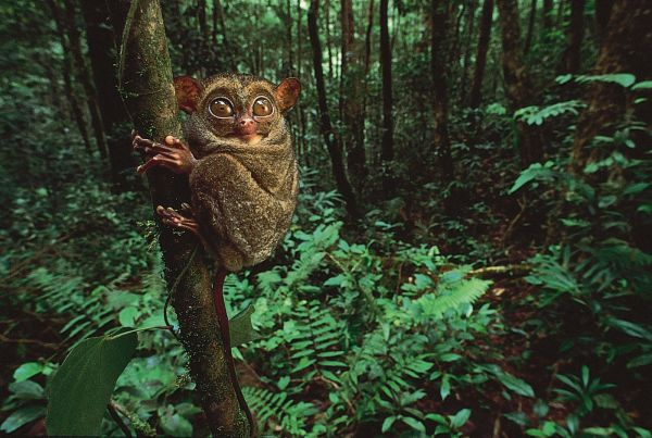 biggest rainforests in the world