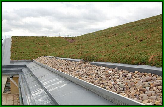 Witham Old Age Home Flaunts Grass Roof Green Diary