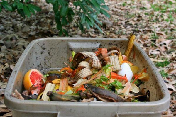 food-scraps-537x357