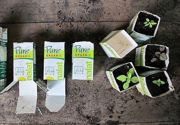 milk-carton-seed-pots