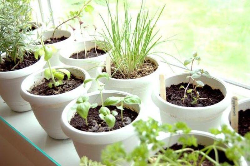 indoor herb garden_1