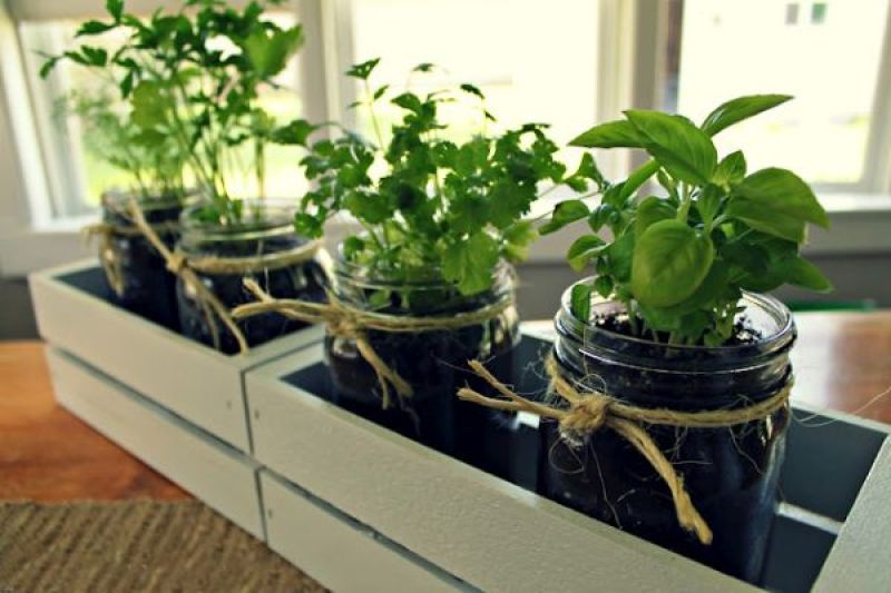 indoor herb garden_2