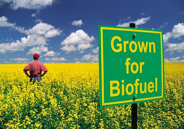 Biofuels to Power a Greener Future_1