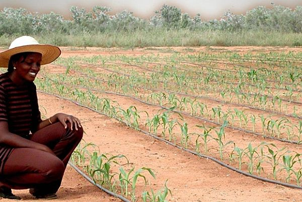 Gravity-powered irrigation by Netafim