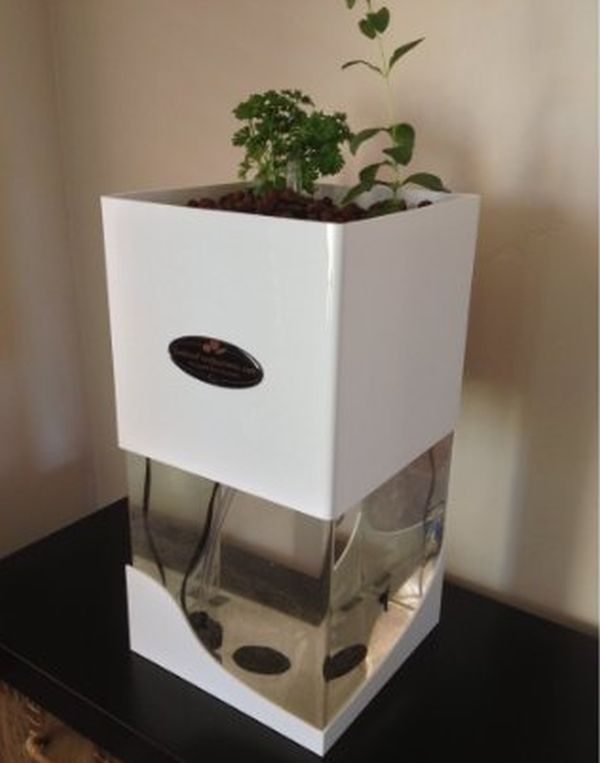 Indoor Herb Garden tabletop aquaponic system