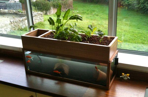home Aquaponics (3)