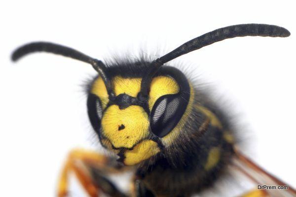 prank on wasps