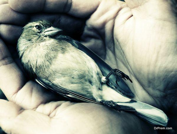 died bird