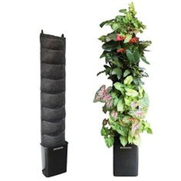 No-Mess DIT living wall kits