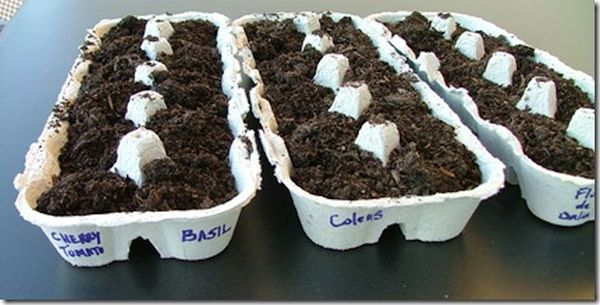 Seed Planters