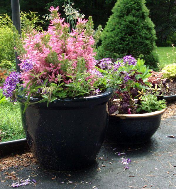 Container gardening (1)