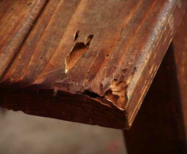 furniture destroyed by bugs