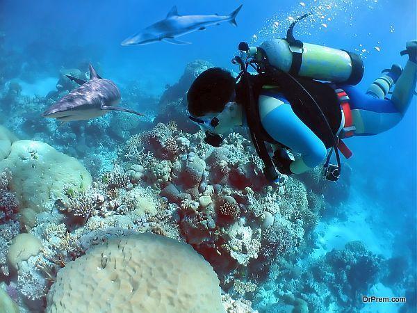 Follow Diver