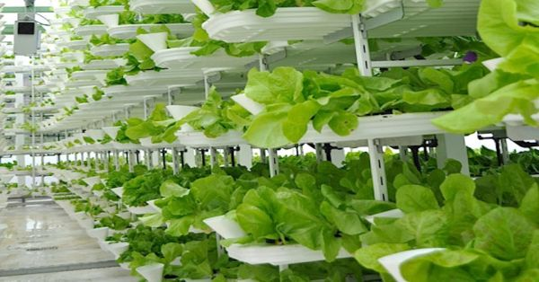 vertical farming (1)