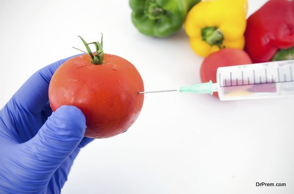 Man with gloves working with tomato in genetic engineering laboratory. GMO food concept.