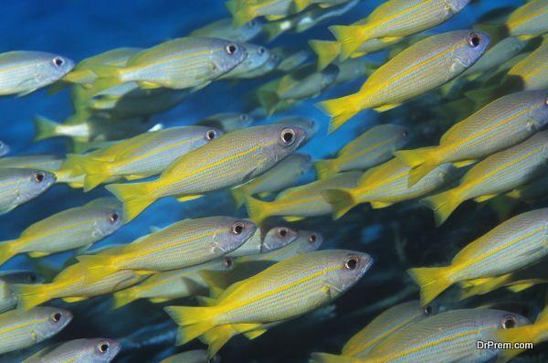 marine-conservation-1