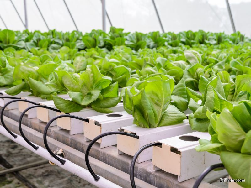 About Aquaponics Systems