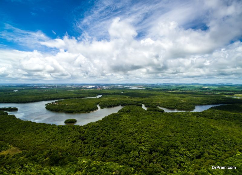 Amazon-Rainforest