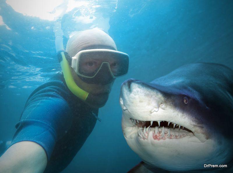 Wild-life-selfies