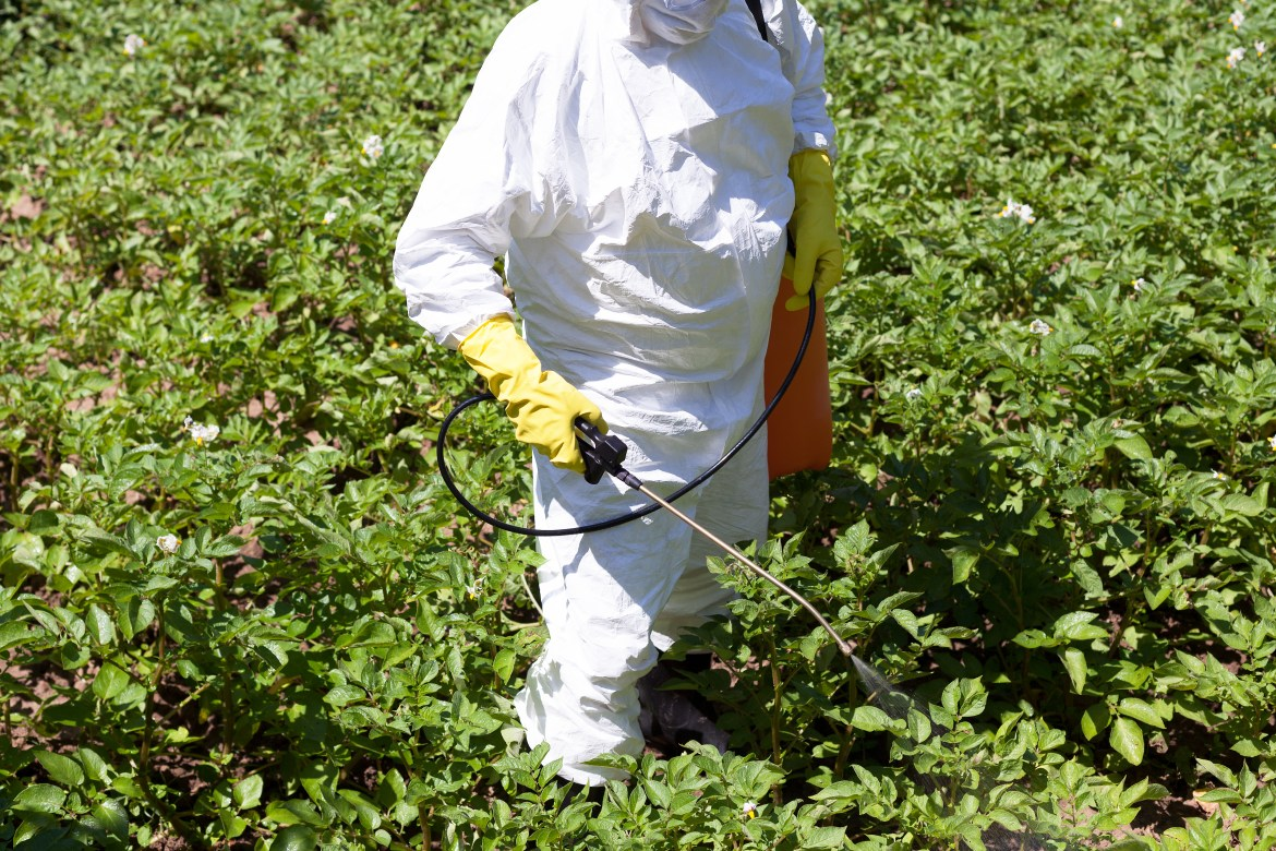Don't use pesticides, herbicides or fungicides