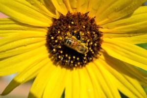 Plant bee-friendly, native plants