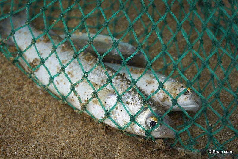 fishing-sustainably