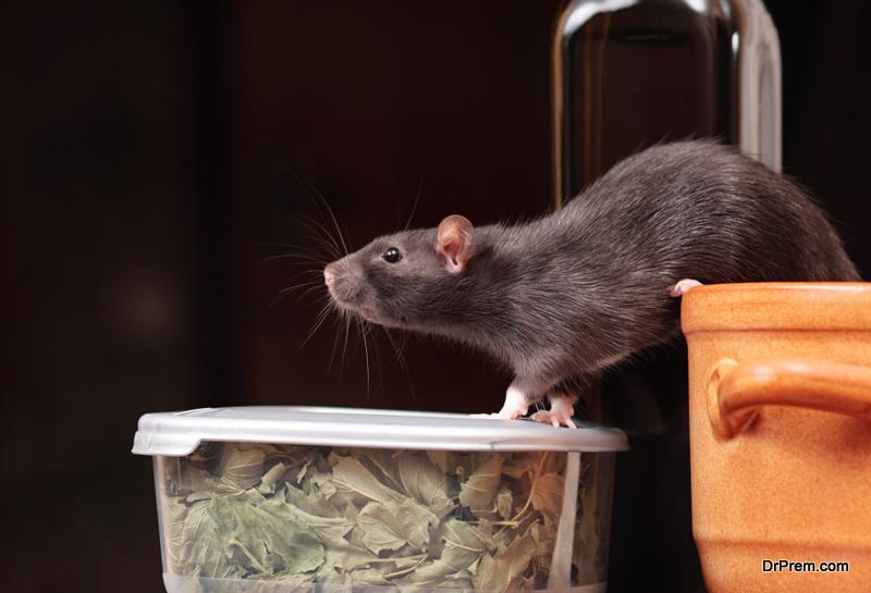 Types-of-Mice