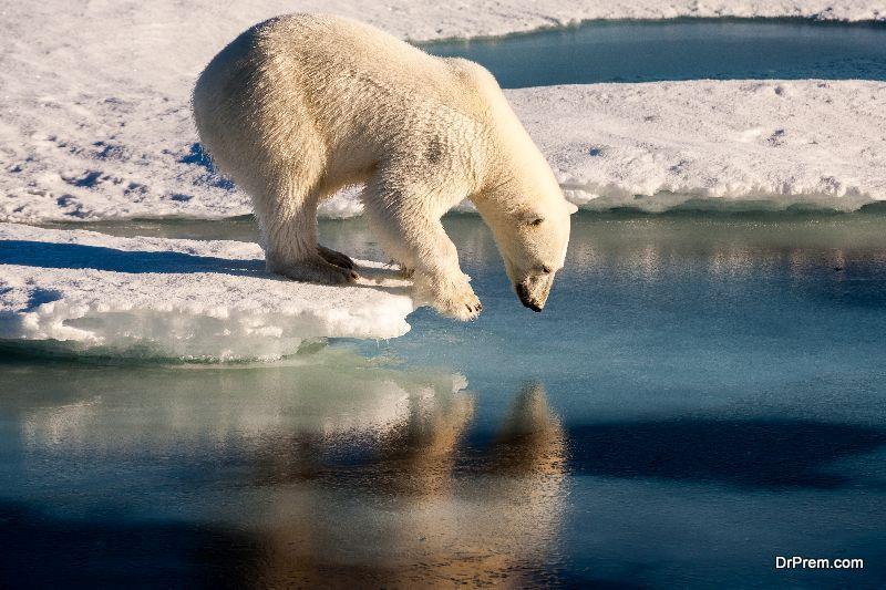 sustainable-development-of-Arctic