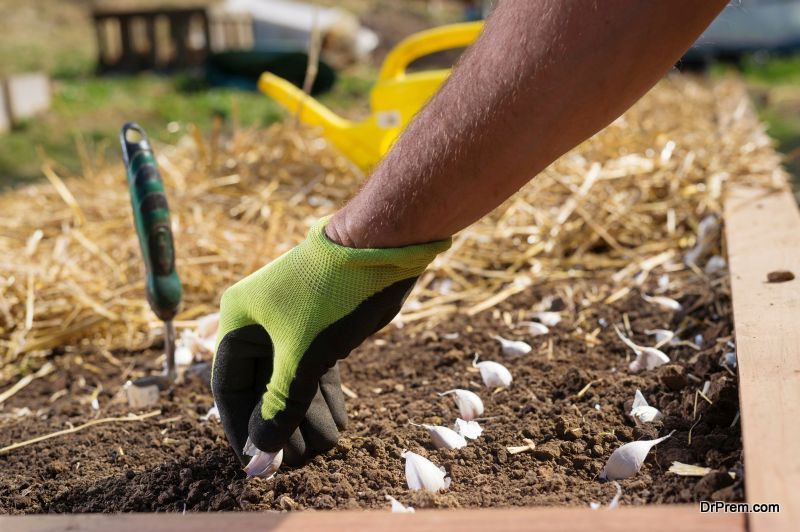 Growing Space in your Garden
