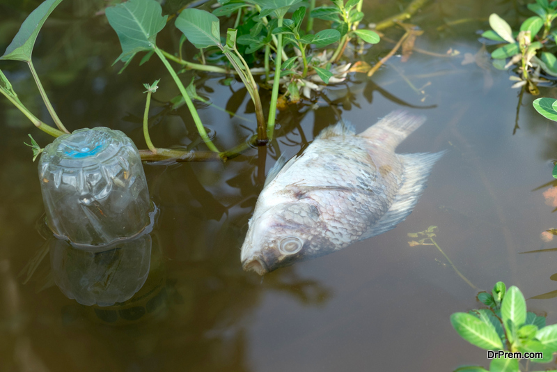 Fish Eating Plastic