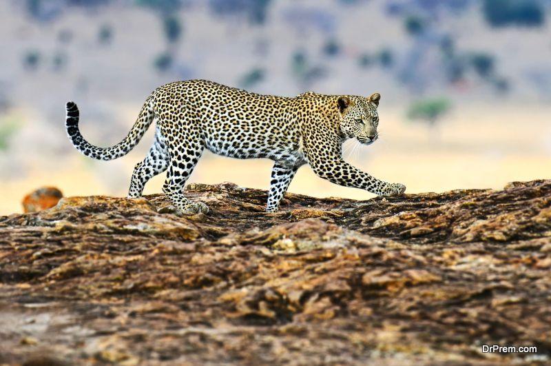 Poaching In Maasai Mara