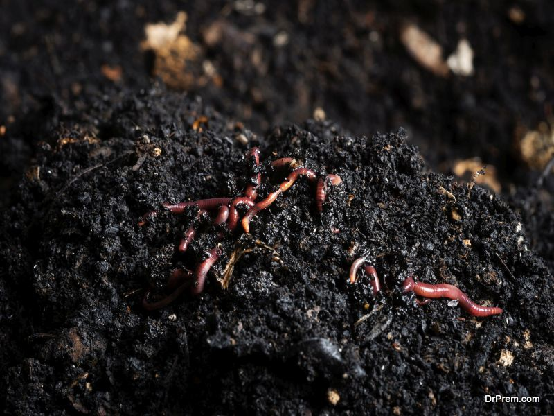 Importance-of-Composting