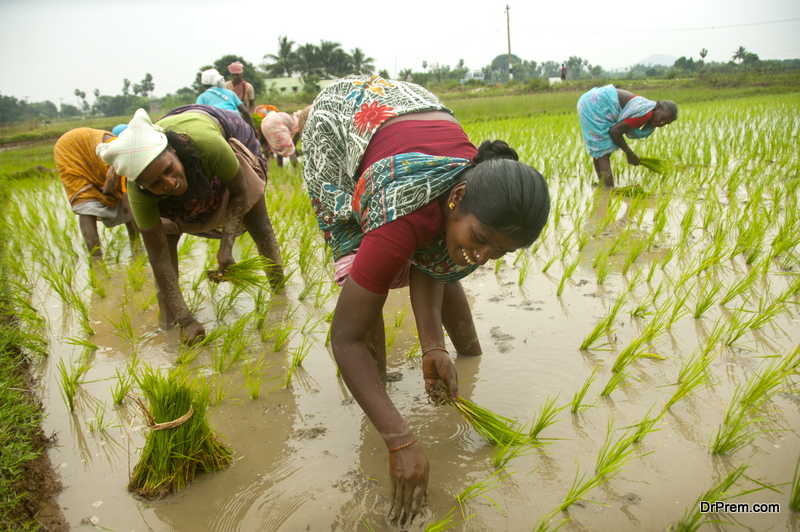 problems-of-agriculture-in-India