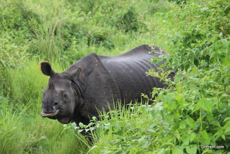 West-African-Black-Rhinos