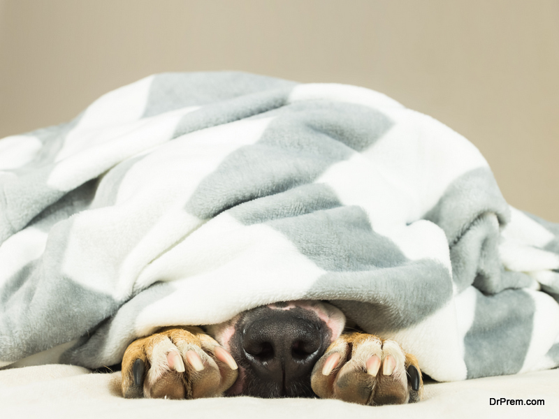 Eco-friendly Pet Blankets
