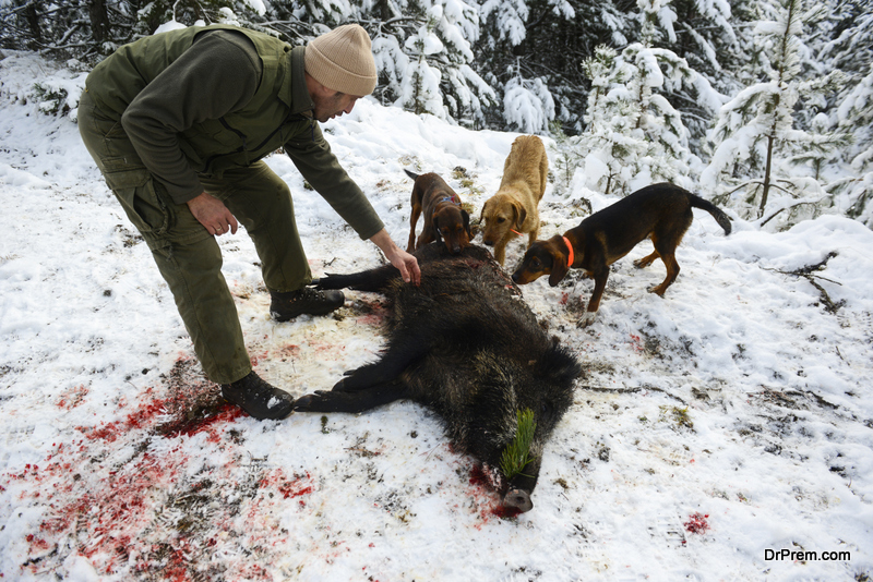 dogs-amongst-the-major-threats-to-endangered-species
