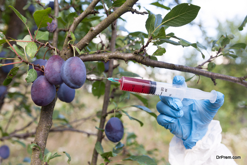 Genetically modified plums