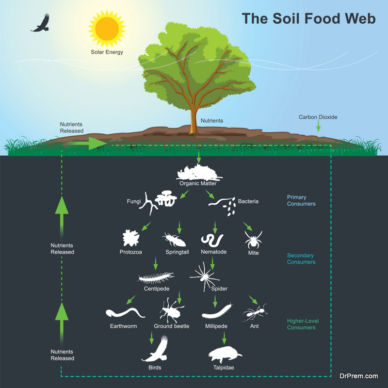 feeding soil microbe is so important