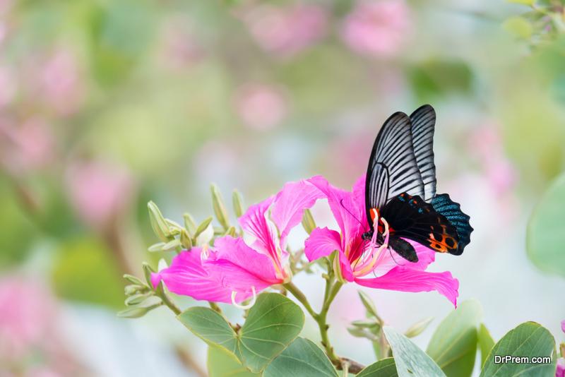 A-Butterfly-Garden