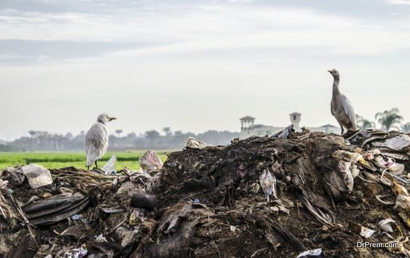waste is destroying the environment