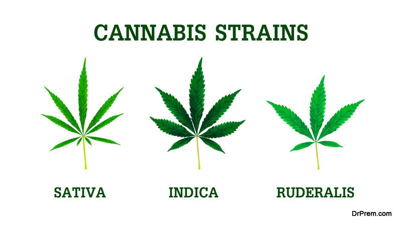 Cannabis Strains For Commercial Gardens