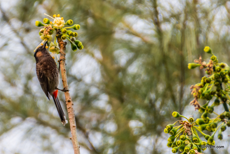Transform your yard into an oasis for birds