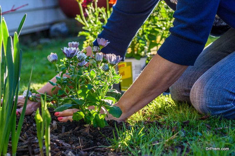 Flower Gardening With Perennials