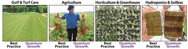 quantum-growth-application-picture